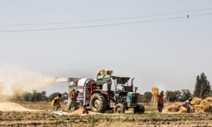 Indian farmers at the harvestFarmers are threshing their rice with a machine at Palitana, Gujarat, India.
