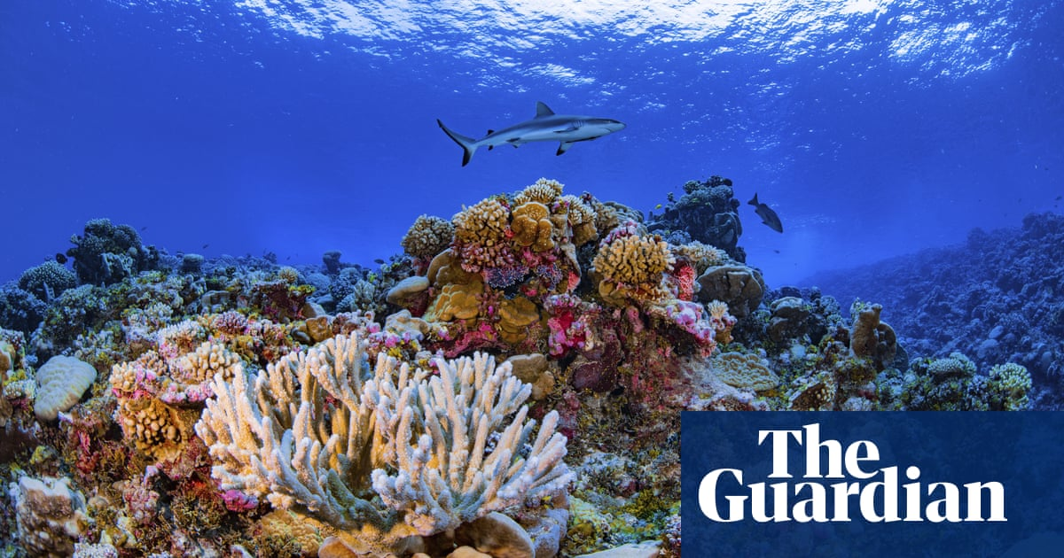 14% of world's coral lost in less than a decade, study shows