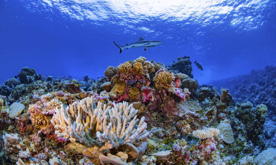 A shark swims on a reef in the Ailinginae atoll in the Marshall Islands