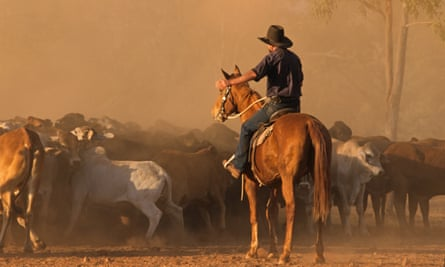 A cattle muster in the Kimberley