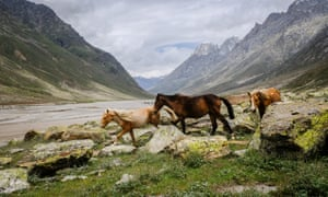 Three horses on their summer grazing grounds.