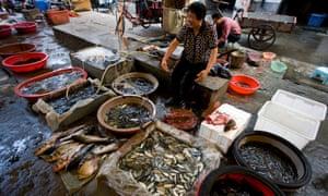 Fish market at Honghu City market