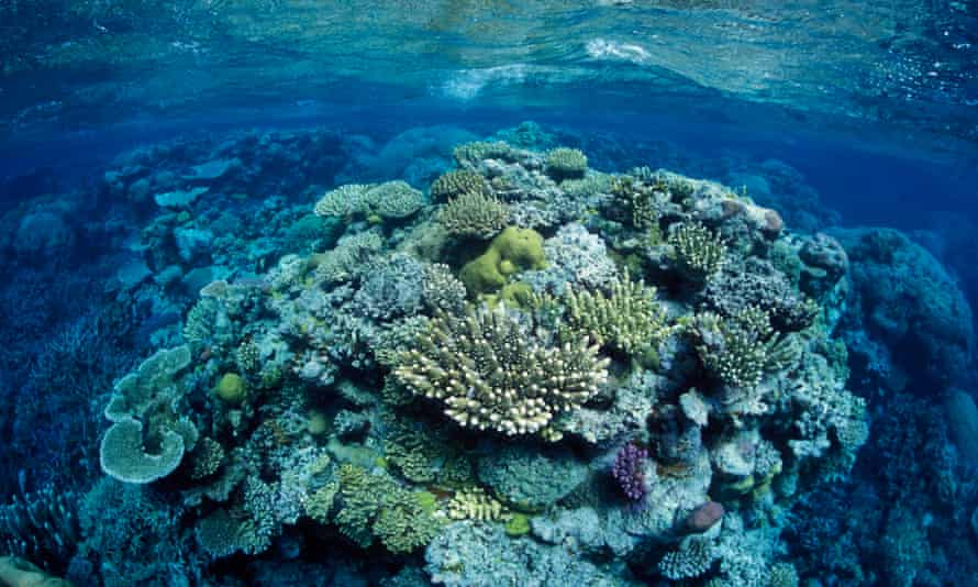 Coral at the Great Barrier Reef, north-east of Port Douglas, Queensland