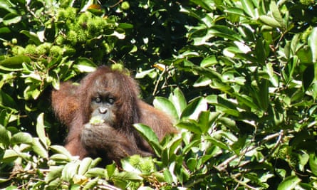 """""""As a tropical field ecologist studying rainforest destruction in Borneo, I saw the impact of the expanding palm oil industry on tropical biodiversity first hand."""""""