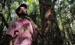 don severo inspects a chicle tree that has been cut, Yucatan