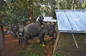 Indian policemen guide their elephants to demolish huts which forest officials claimed were illegally built at the Amchang wildlife sanctuary.