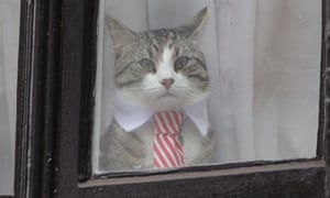 Photo from 14 November, 2016, of a cat that is believed to belong to Julian Assange.