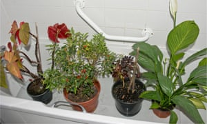 Top tips for holiday-proofing houseplants | Life and style
