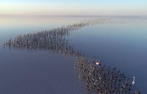 Flamingos on the Lake Tuz, Turkey