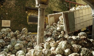 Ford hopes to use agave fibers to create a so-called bioplastic to replace synthetic materials in its cars for things like storage bins, air-conditioning ducts and fuse boxes.