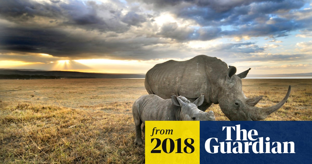 Rhinoceros DNA database successful in aiding poaching