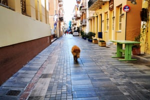 A dog walks along an empty street in Nafplio, Greece, on Wednesday