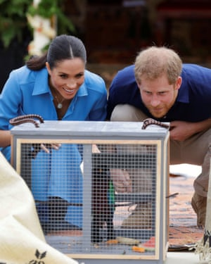 Britain's Prince Harry and Meghan, Duchess of Sussex, look at a caged parrot during a visit to Tupou College in Tonga.