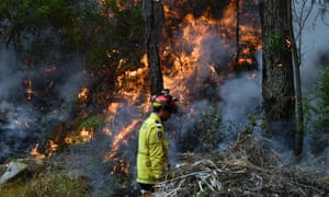 NSW fires: the state is bracing for extreme bushfire conditions on Tuesday. A firefighter conducts back burning measures
