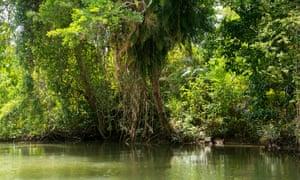 The Daintree River in Queensland