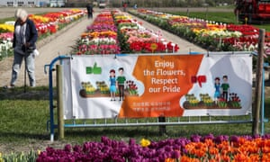 A banner in front of a tulip field in the Netherlands