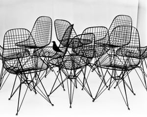 Wire Chairs with bird, 1953.