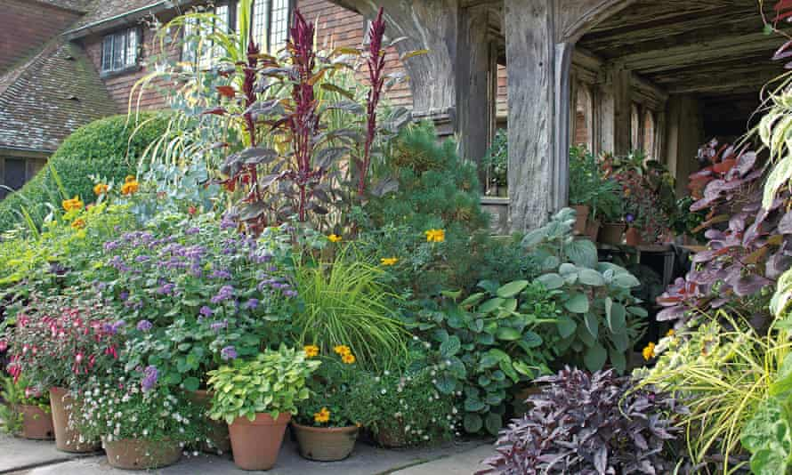 Potted plants outside a back door