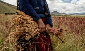 WOman hold quinoa in field in Peru