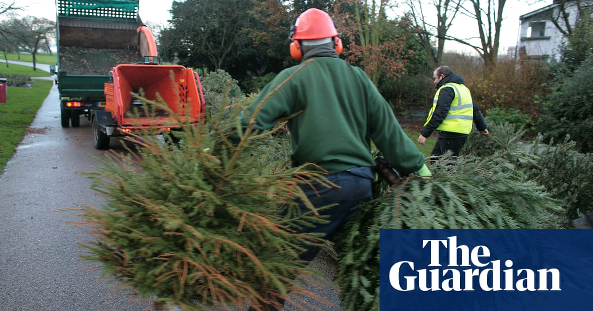 Are Real Or Fake Christmas Trees Better For The Planet Life And