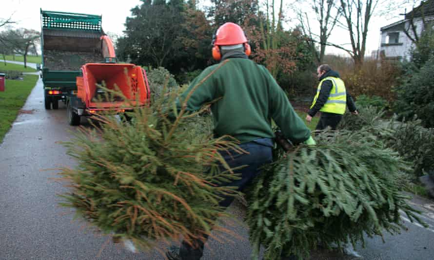 Christmas tree recycling in Catford, south London