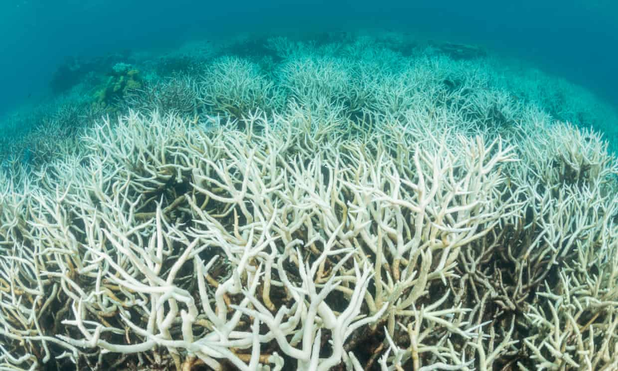 Coral bleaching on the Great Barrier Reef in Australia.