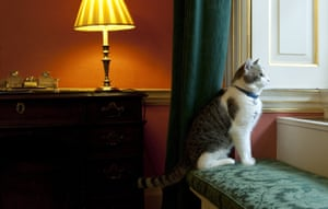 Larry the Cat gazes through the window. The brown and white tabby is entrusted with the rat-catching portfolio