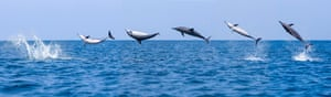 Leaping dolphins off Sri Lanka draw huge crowds.