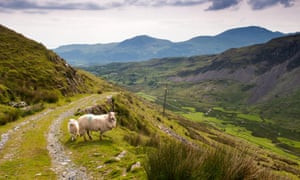 Sheep are a permanent presence when hiking in Snowdonia.