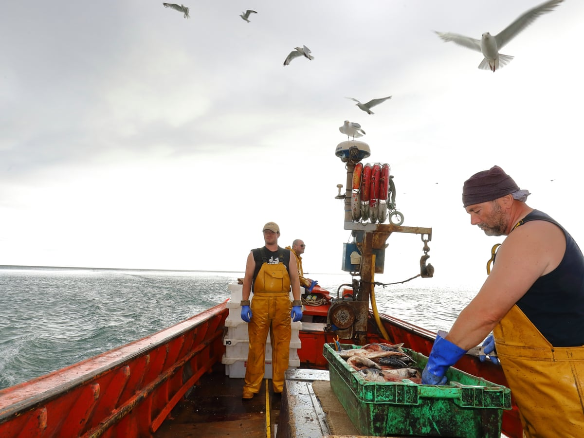 Dead Kittiwakes Dwindling Fish And Oceans Of Plastic My Voyage Of Discovery Marine Life The Guardian