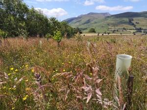 Blencathera meadow