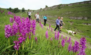 Walkers pass by wild orchids on a pretty route through Cressbrook Dale, Peak District