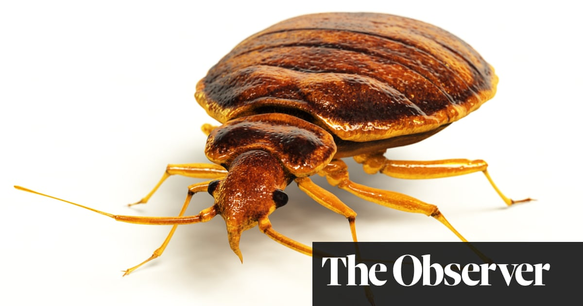Bedbugs Plague Hits British Cities Uk News The Guardian