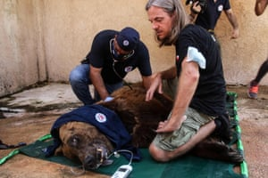 One of two Syrian brown bears is sedated and examined before being transferred to the US by members of the global animal welfare organisation Four Paws, near Tyre, Lebanon. Together with the local NGO Animals Lebanon, Four Paws will relocate the two bears from inadequate conditions in a private Lebanese zoo to a wildlife sanctuary in the US. Due to the economic collapse, civil unrest and the global pandemic the previous owners of the 18-year-old bears were not able to provide them with proper food and medical care