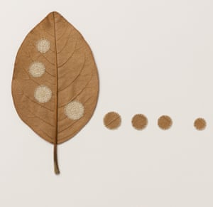 Four Circles lll, a leaf sculpture by Susanna Bauer