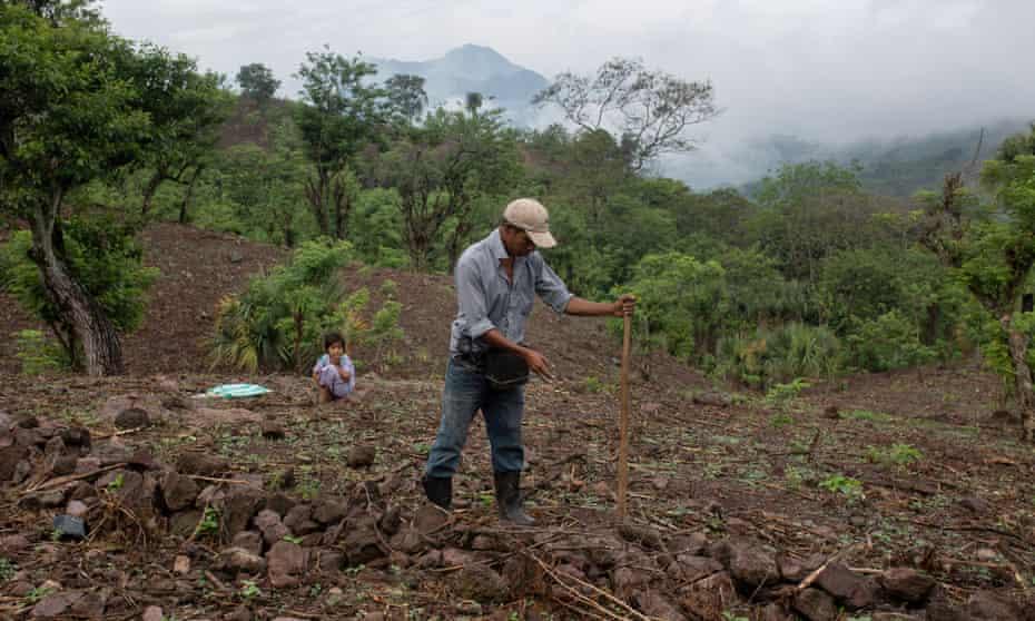 Carlos Gutierrez, 20, plants corn along a sloped terrain as his niece Delmi, 6, watches from behind.