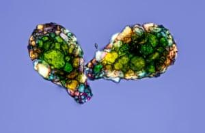 Amoeba Shells by Gerd Guenther.