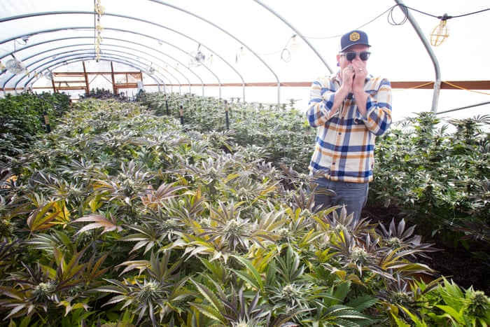 Pot is power hungry: why the marijuana industry's energy