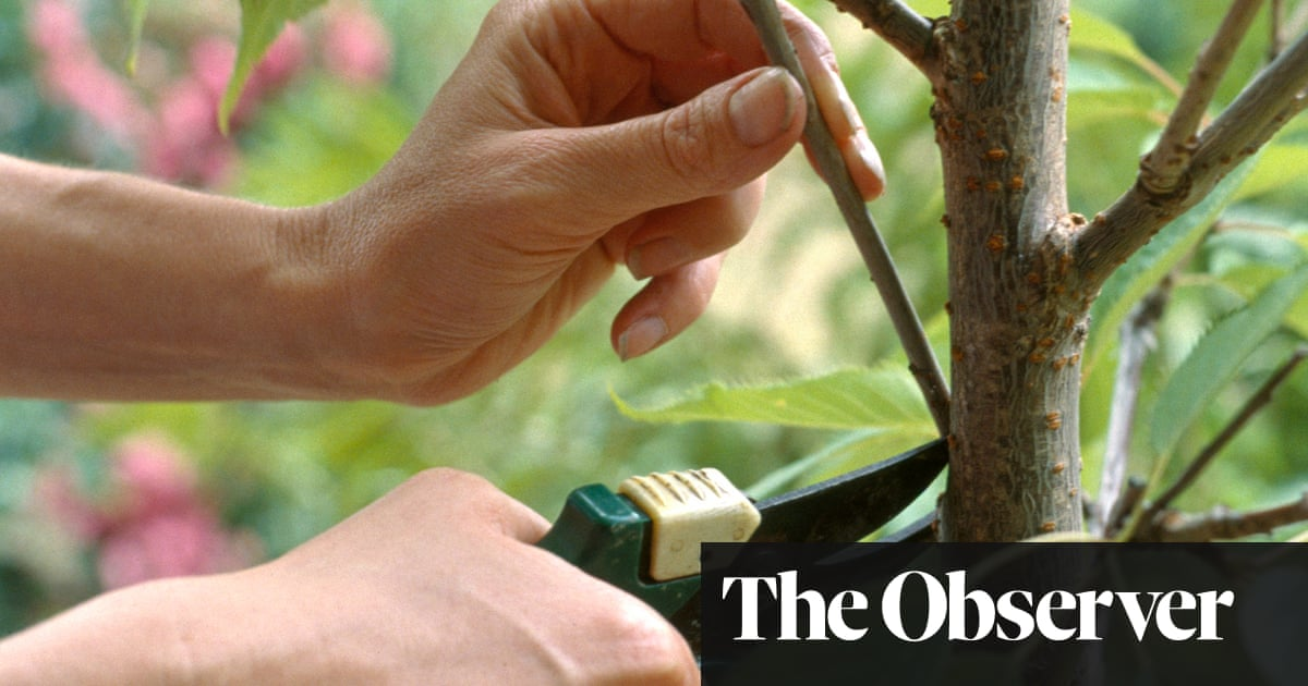 Kindest cuts: easy pruning | James Wong | Life and style | The Guardian