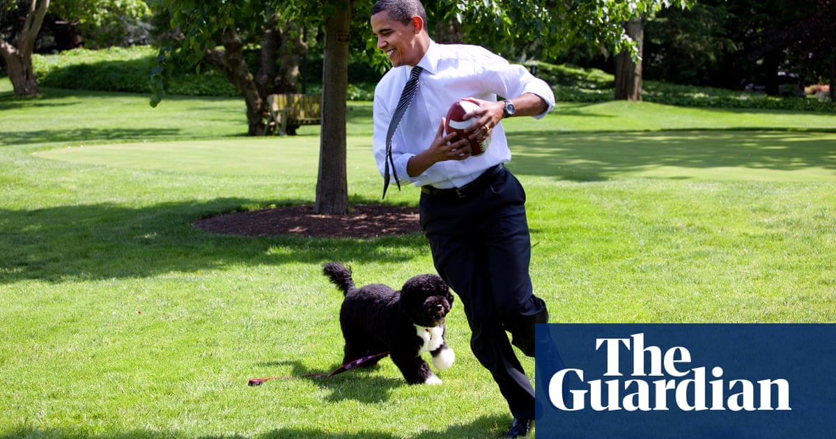 'Big bark but no bite': Obamas mourn former first dog Bo