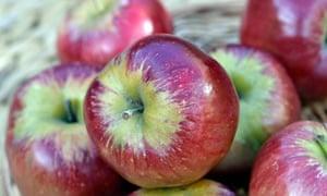 Bloody Ploughman apple.