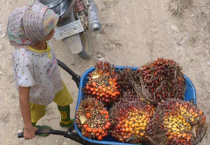 A palm oil worker in Riau province in Indonesia's Sumatra island
