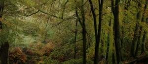 Beech trees at Flint Clough