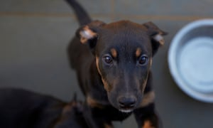 Doberman dogs suffering from narcolepsy played a vital role in the search for a cure for the condition.