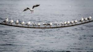 A seagull flies over an already busy cord on the edges of Lake Geneva.