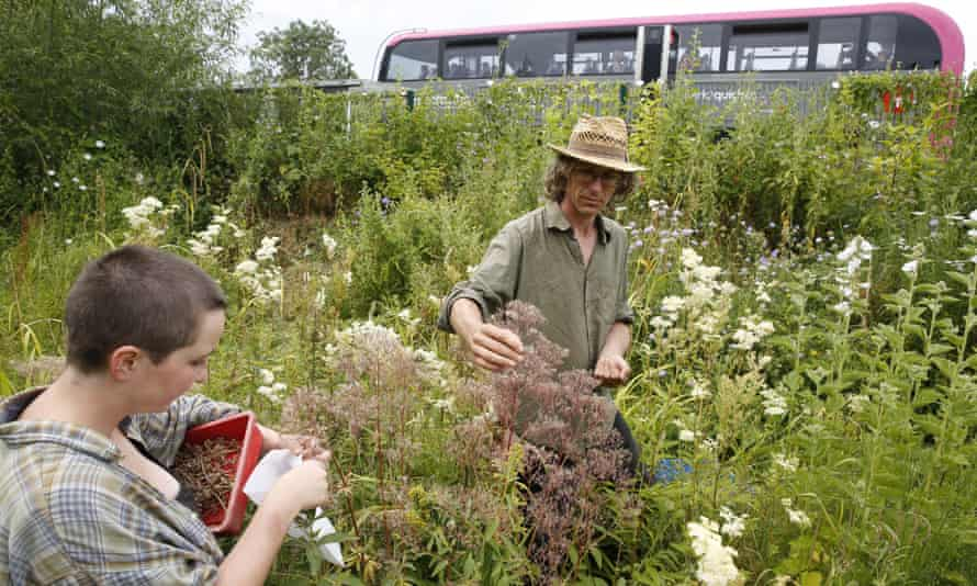 Flower seeds being collected at Feed Bristol, a six-acre wildlife gardening hub.