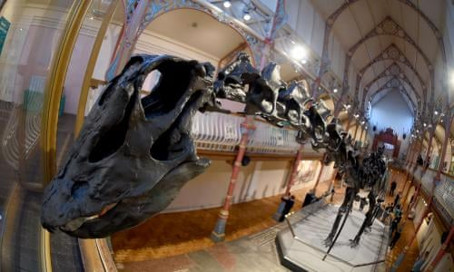 Dippy the dinosaur unveiled in Dorset on first leg of UK