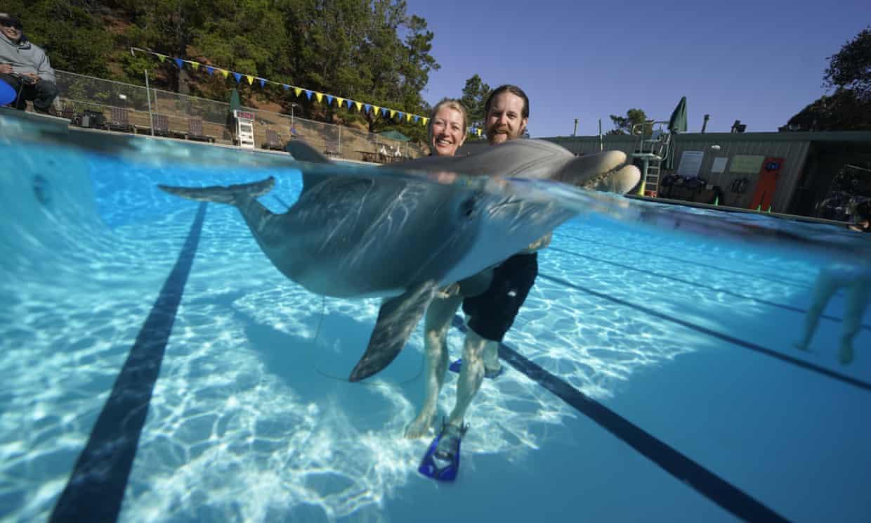 Animatronic dolphins in development Photograph: Edge Innovation