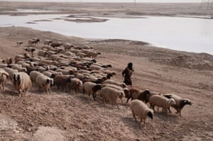 A farmer herds his flock of sheep past the climate-stricken Shatt al-Arab River in Basra, Iraq