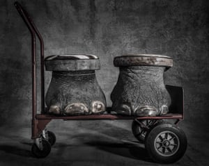 Stools made from elephant feet, which are featured in Britta Jaschinski's Crimes series
